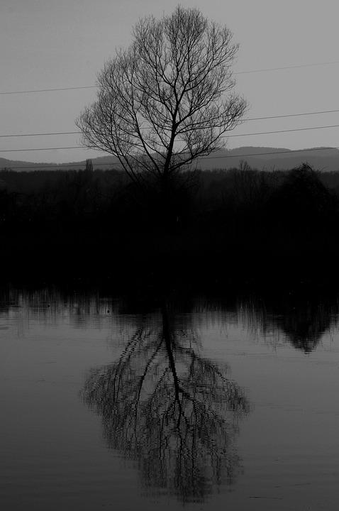 Tree, Art, Black, Nature, Mystical