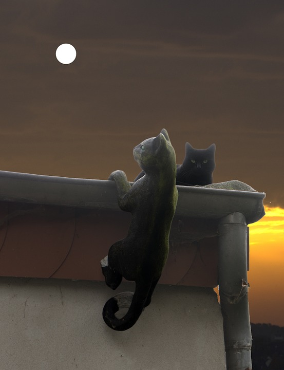 Cat, Moon, Atmosphere, Scene, Creepy, Black, Night