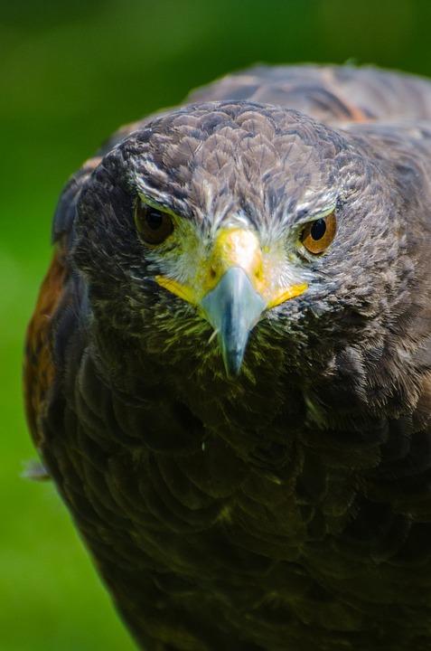 Adult, Animal, Beak, Beautiful, Bird, Birding, Black