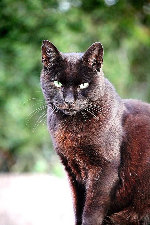 Cat, Black, Pet, Black Cat, Animal, Cat's Eyes, View