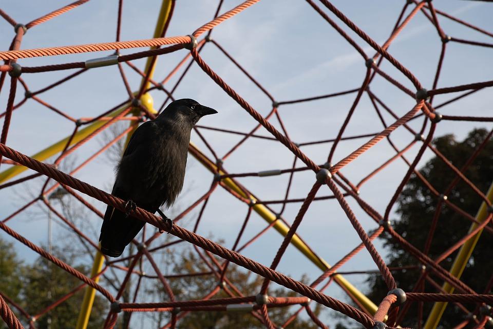 Crow, Children's Playground, Black Crow, Rope, Black