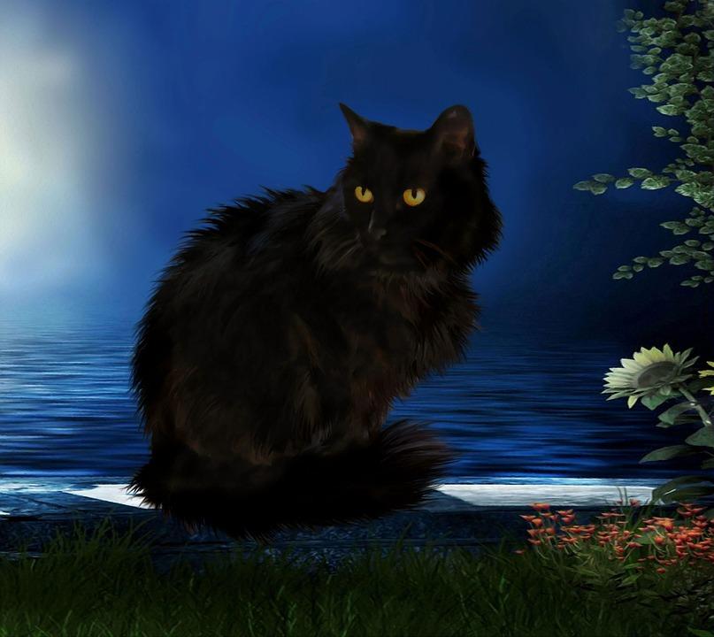 Blackcat, Cat, Black, Pet