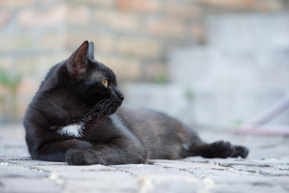 Blak Puss morto o vivo estremo 2 porno