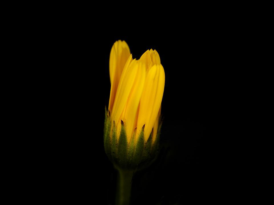 Flower, Yellow, Closeup, Black, Plant, The Background