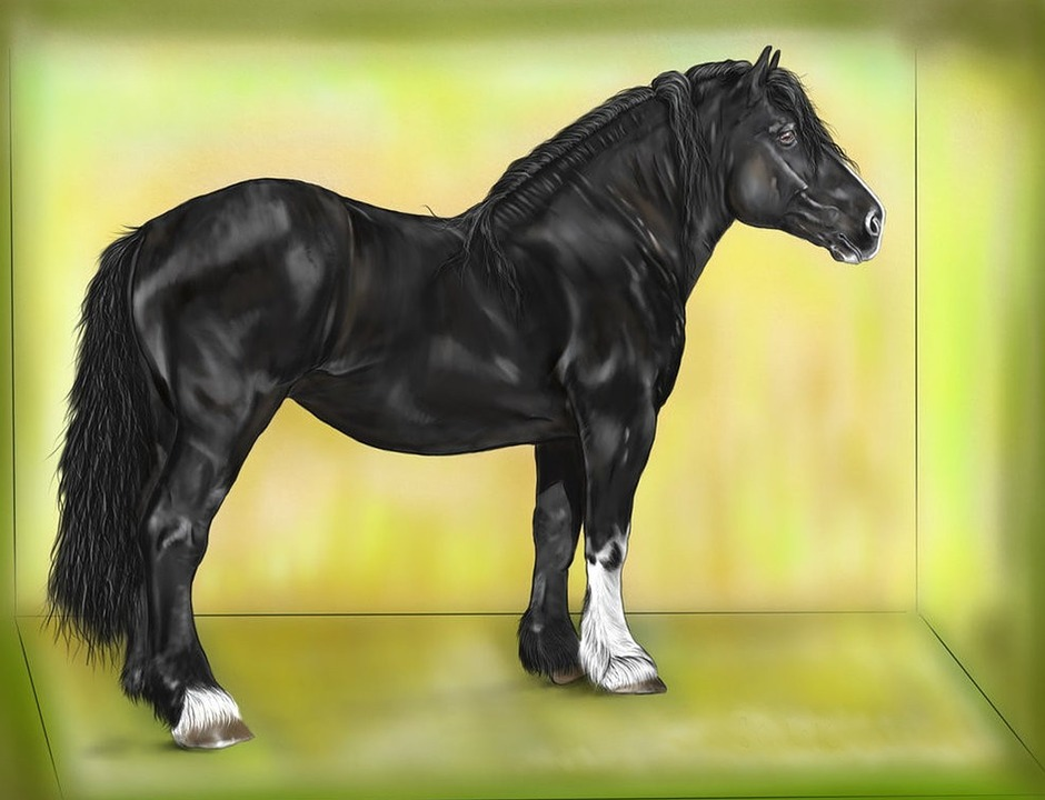 Horse, Black, Digital Painting, Art