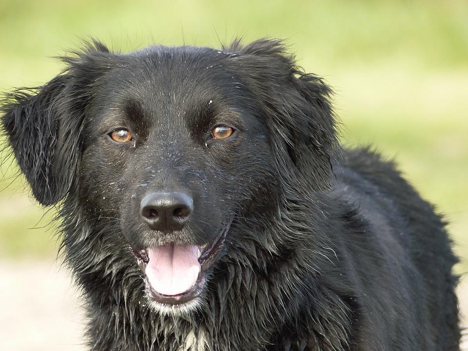 Dog, Dogs, Crossing, Black, Animal, Sweet, Nature