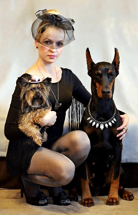Doberman, Yorkie, Dog, Blonde Woman, Elegant, Black