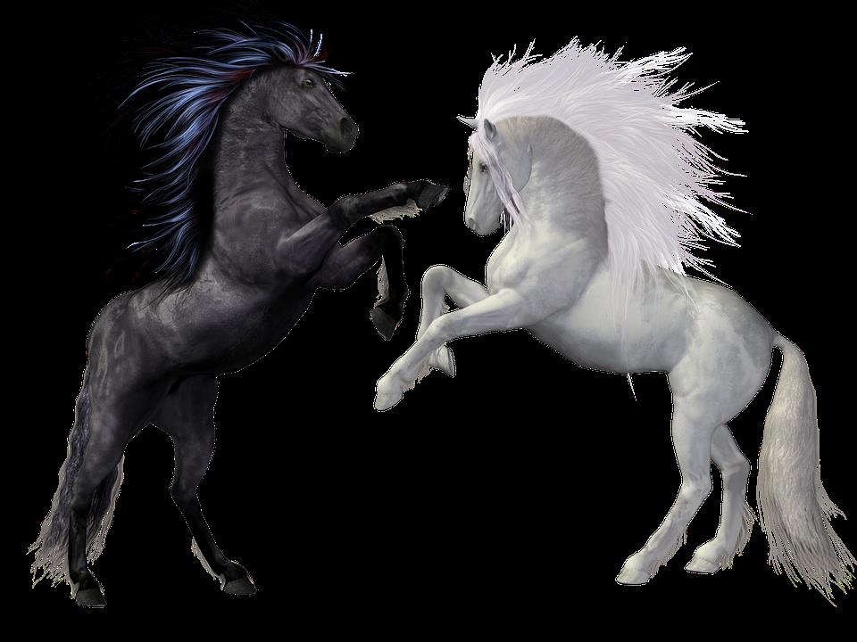 Horses, Black, White, Animals, Mold, Rap, Fight, Mane