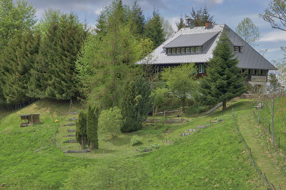Forest House, Black Forest, School, Grass, Nature, Tree