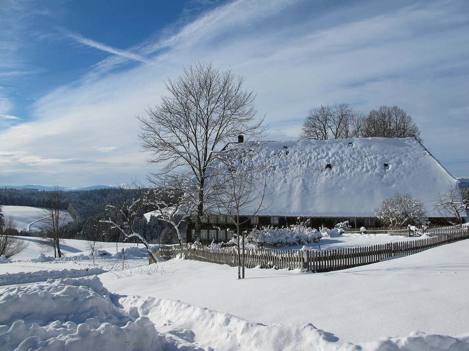 Wintry, In The, Black Forest, Cold, Snow, Landscape