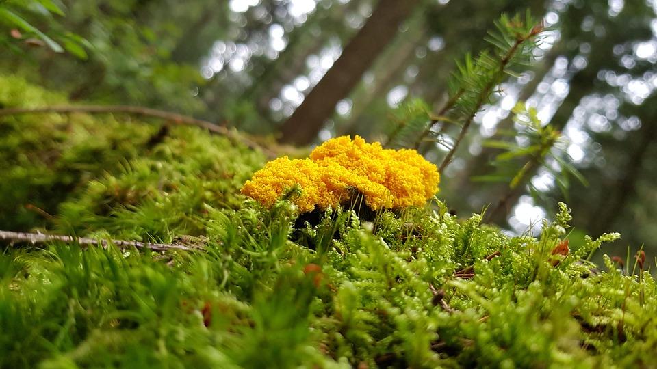 Nature, Mushroom, Slime Mold, Black Forest, Moss