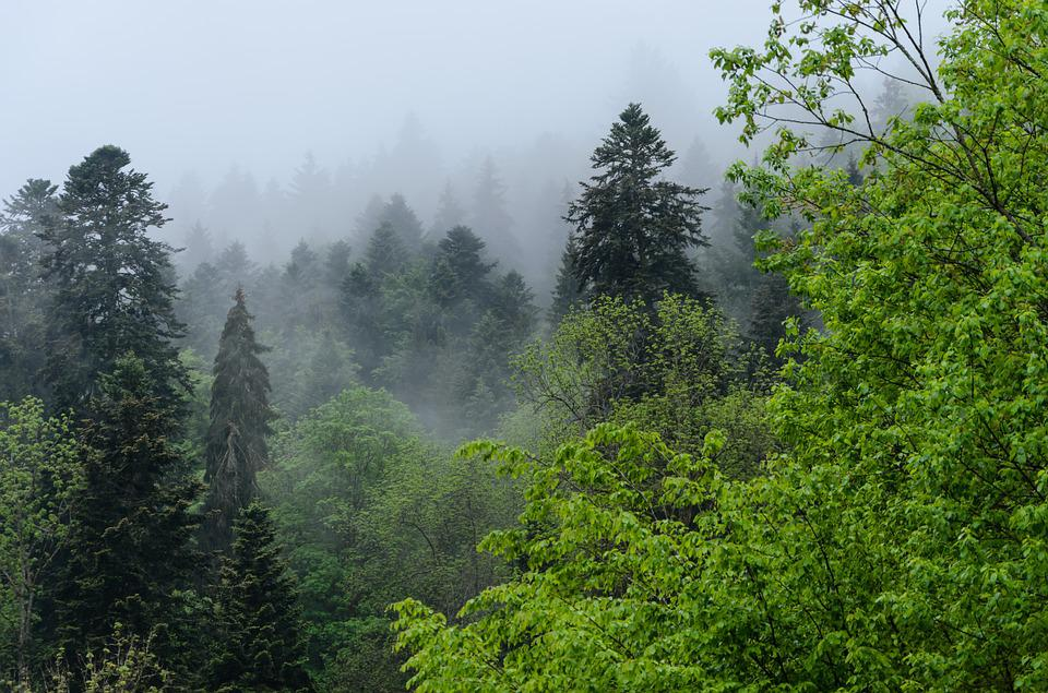 Triberg, Black Forest, Fog, Forest, Nature, Trees