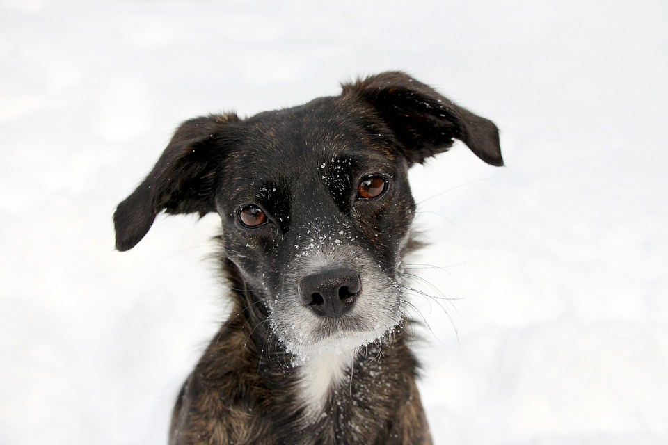 Dog, Portrait, Black, Snow, Face, Cute, Funny, Sweet