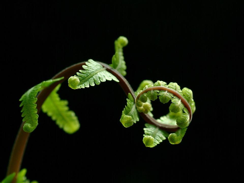 Fern, Tree, Nature, Green, Black