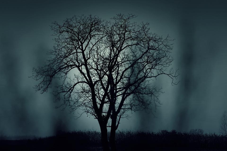 Tree, Silhouette, Mysterious, Halloween, Black, Dark