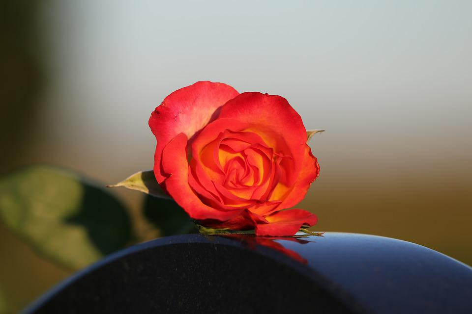 Red Yellow Rose, Heart Monument, Black Marble