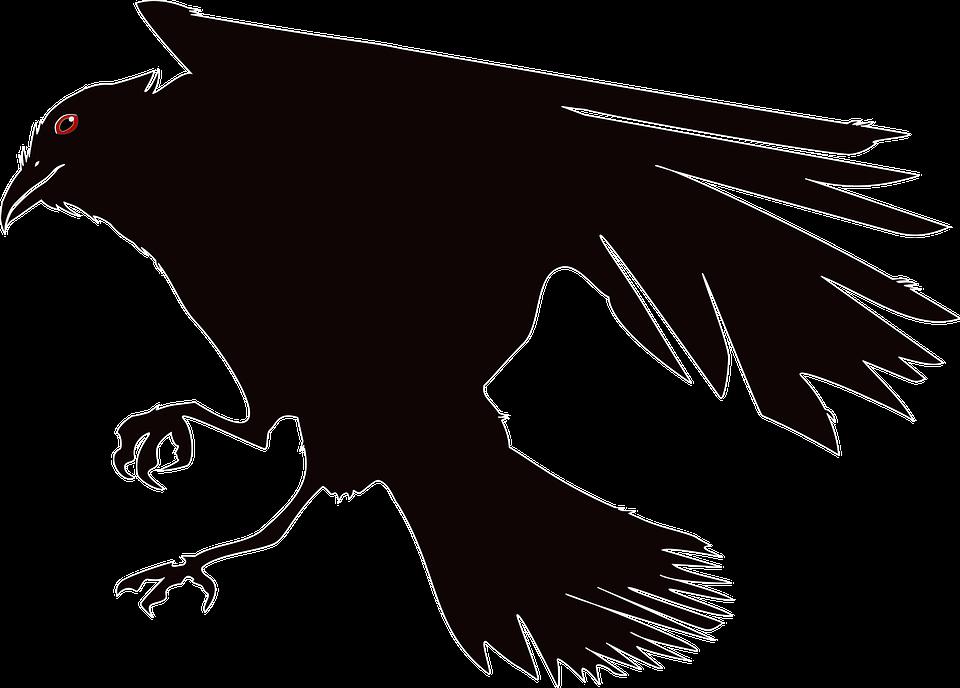 Crow, Raven, Bird, Black, Birds, Bill, Animal, Nature