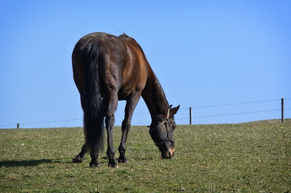 Horse, Black, Nature, Pasture, Grass, Meadow, Eat