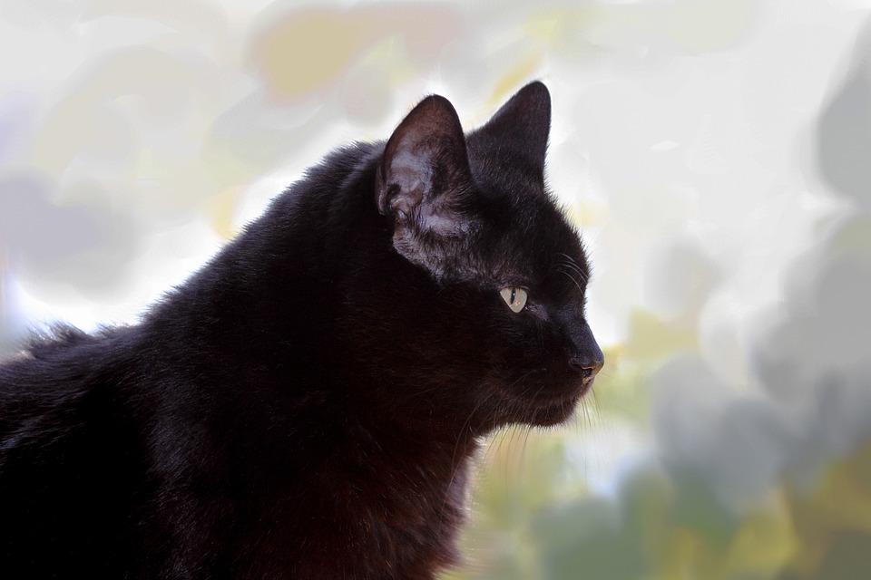 Cat, Black, Beautiful, Pride, Noble, Sitting, Profile