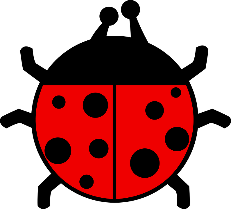Red, Black, Ladybug, Wings, Insect, Spots, Colors