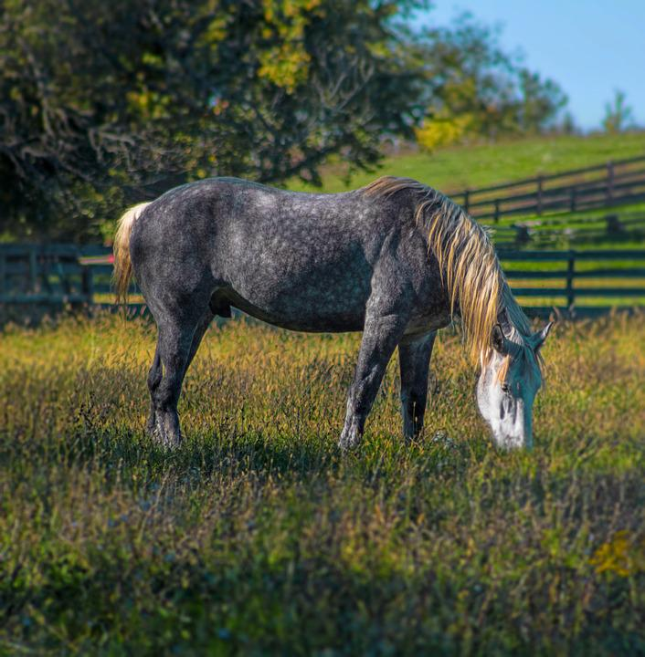 Horse, Spotted, Mane, Nature, White, Black, Green