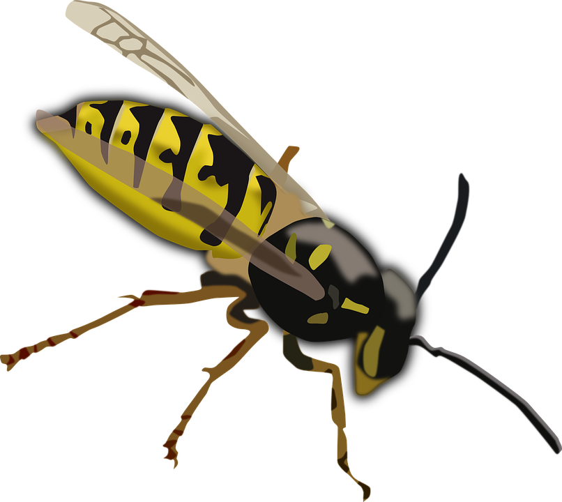 Wasp Hornet Bee Insect Sting Yellow Black Wings
