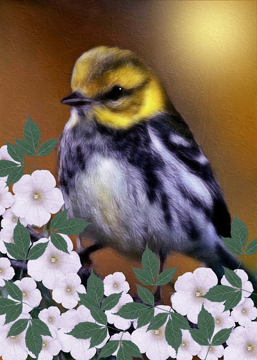 Black-throated Green Warbler, Dendroica Virensdigital