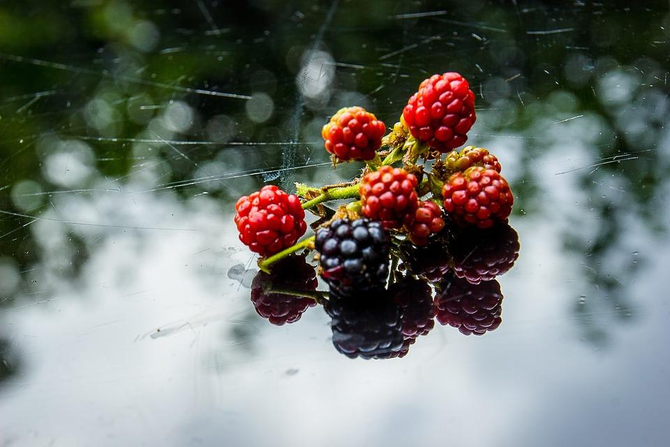 Burr, Blackberries, Blackberry Picking, Forest