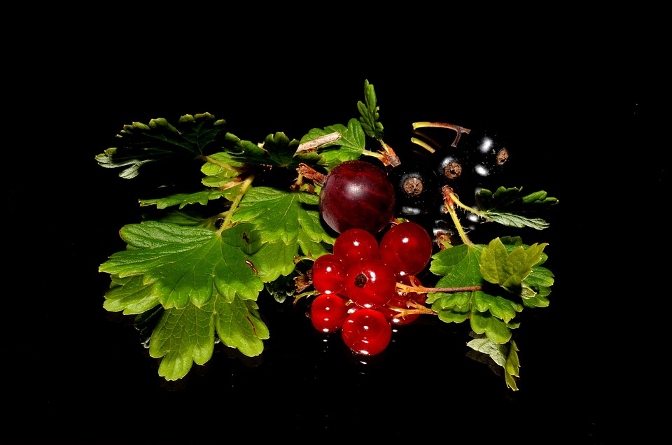 Red Currant, Blackcurrant, Garden