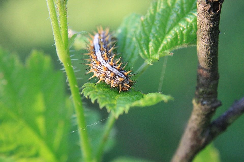 Blade, Caterpillar, Grass, Small, Insects, Nature