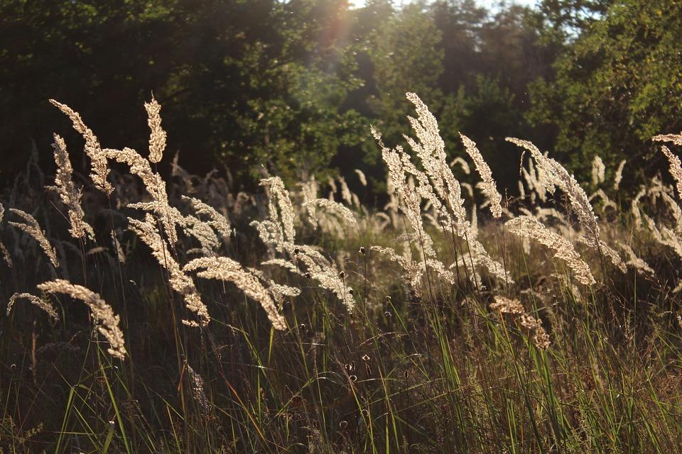 Grasses, Meadow, Nature, Blade Of Grass, Grass
