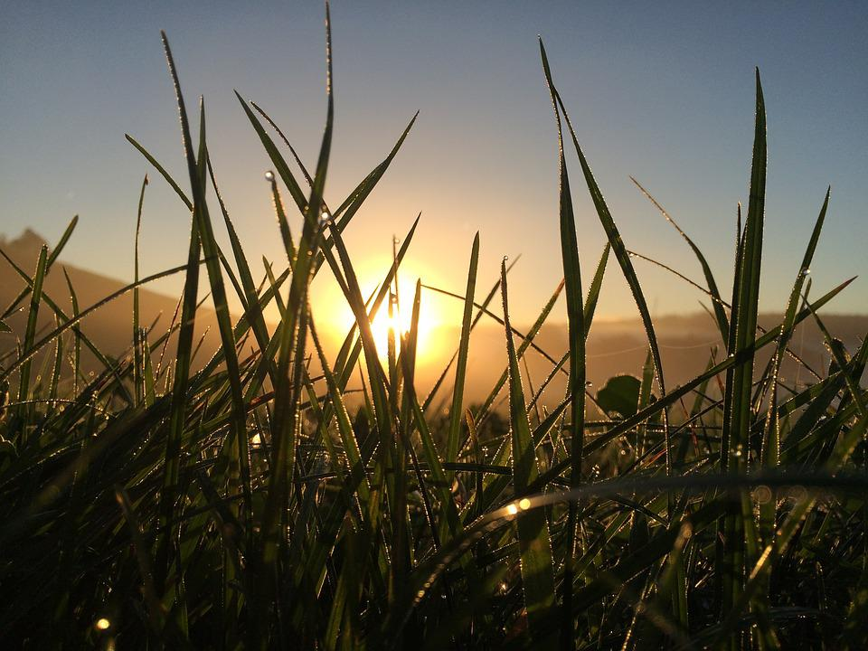 Grass, Meadow, Nature, Blade Of Grass, Green, Plant