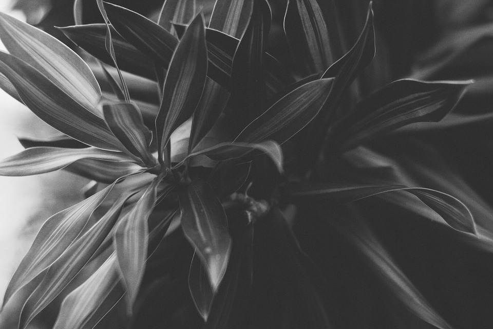 Nature, Black And White, Plant, Blade, Mo, The Shape