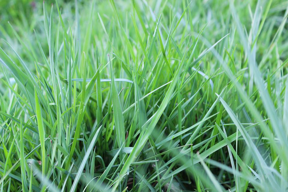 Meadow Grass, Blades Of Grass, Meadow, Pasture, Nature