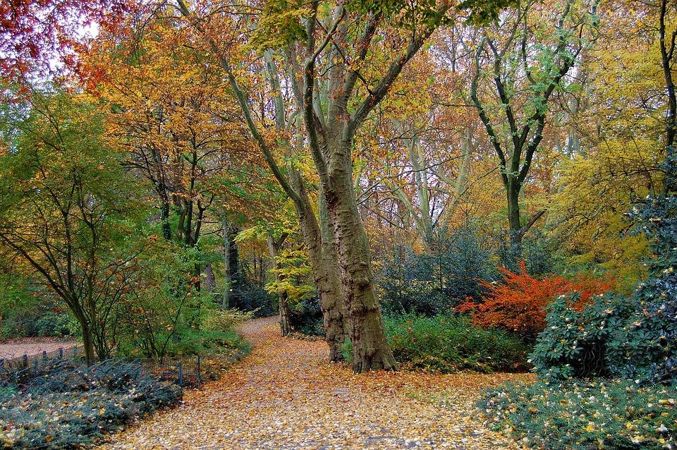 Autumn, Forest, Park, Trees, Shrubs, Colorful, Blatter