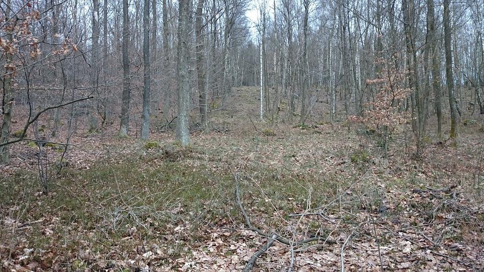 March, Forest, Nature, Kahl, Cold, Bleak