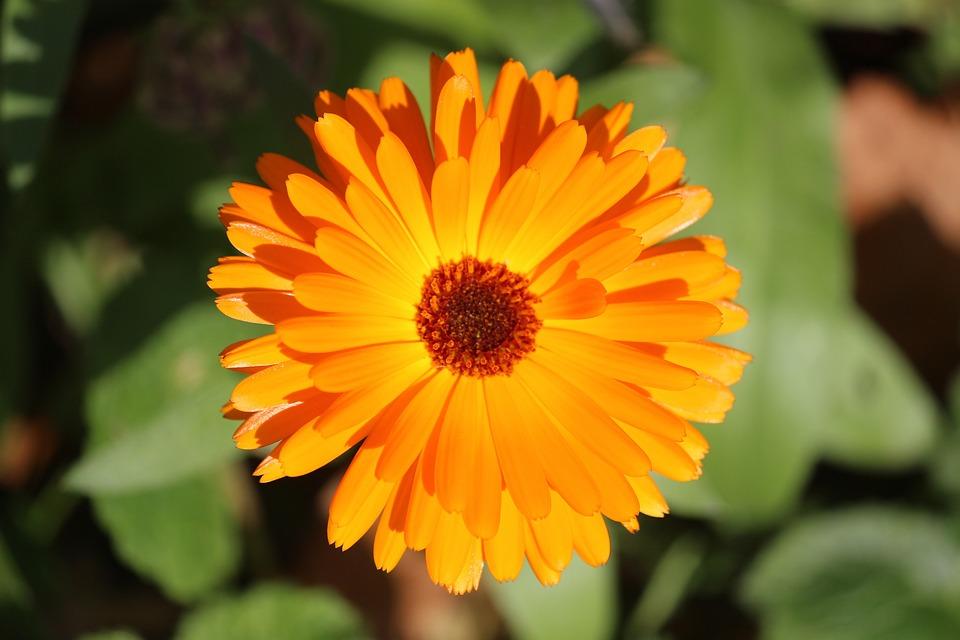 Flower, Autumn, Yellow, Bright, Blossom, Bloom