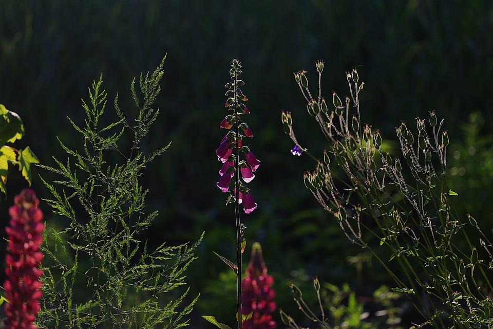 Beauty, Flowers, Garden, Nature, Summer, Bloom, Sun