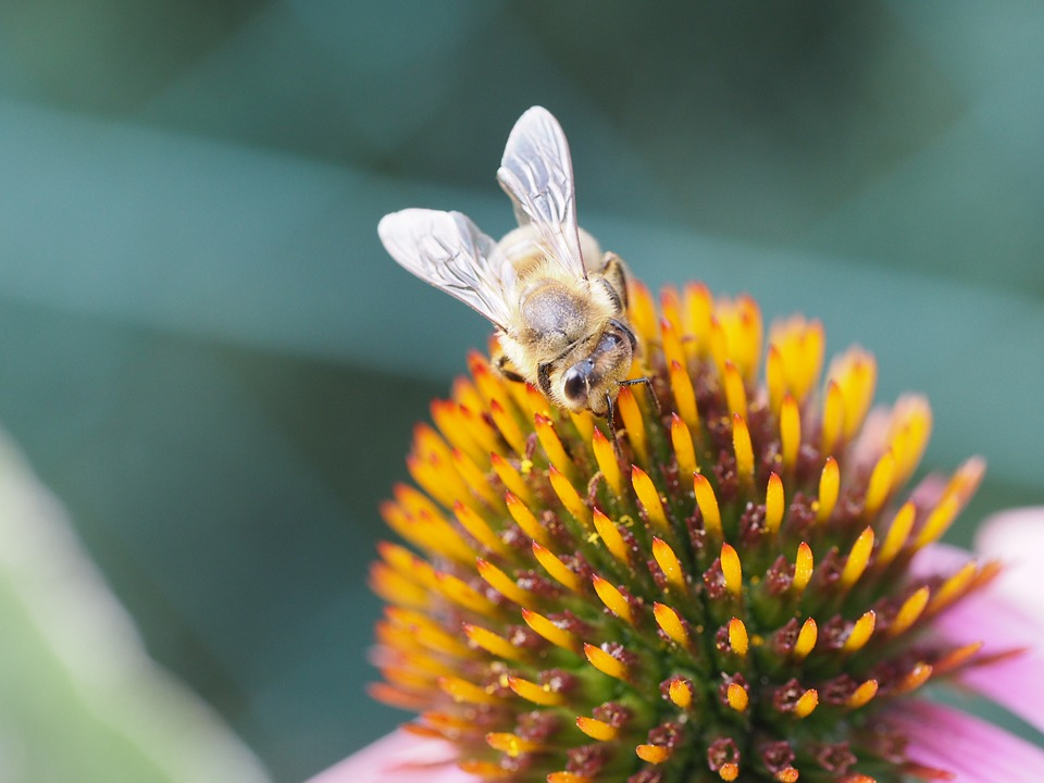 Bee, Blossom, Bloom, Sprinkle, Summer, Sun, Background