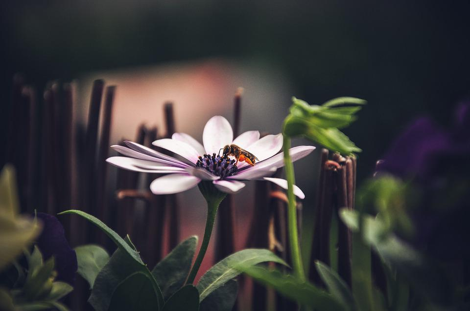 Blossom, Bloom, Bee, Insect, Flower, Pollen, Nature