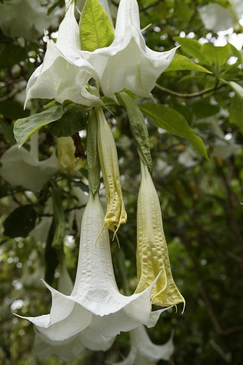 Free photo Bloom Bignoniaceae Plants Catalpa Tree Flowers - Max Pixel