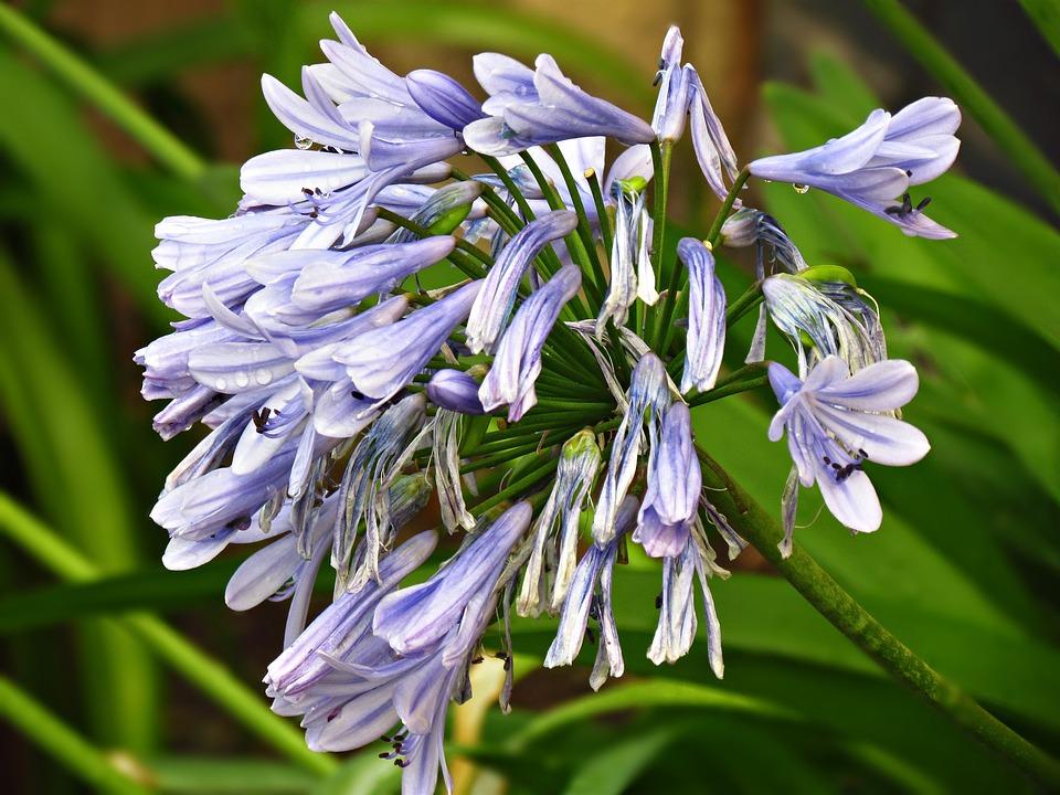 Flower, Plant, Nature, Spring, Bloom, Blooms