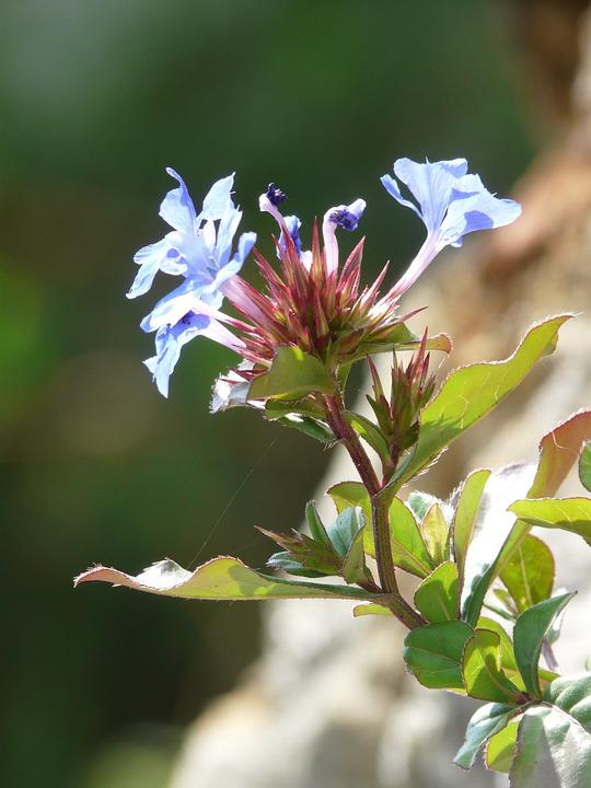Flower, Nature, Plant, Blossom, Bloom, Farbenpracht