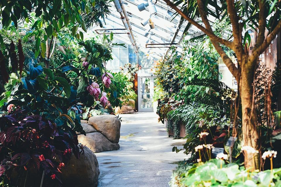 Bloom, Blossom, Flora, Flowers, Garden, Greenhouse
