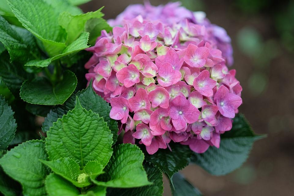 Flowers, Leaf, Nature, Plant, Bloom, Blossom, Botanical