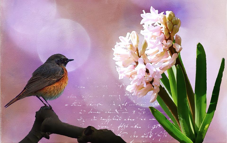 Hyacinth, Flower, Blossom, Bloom, Plant