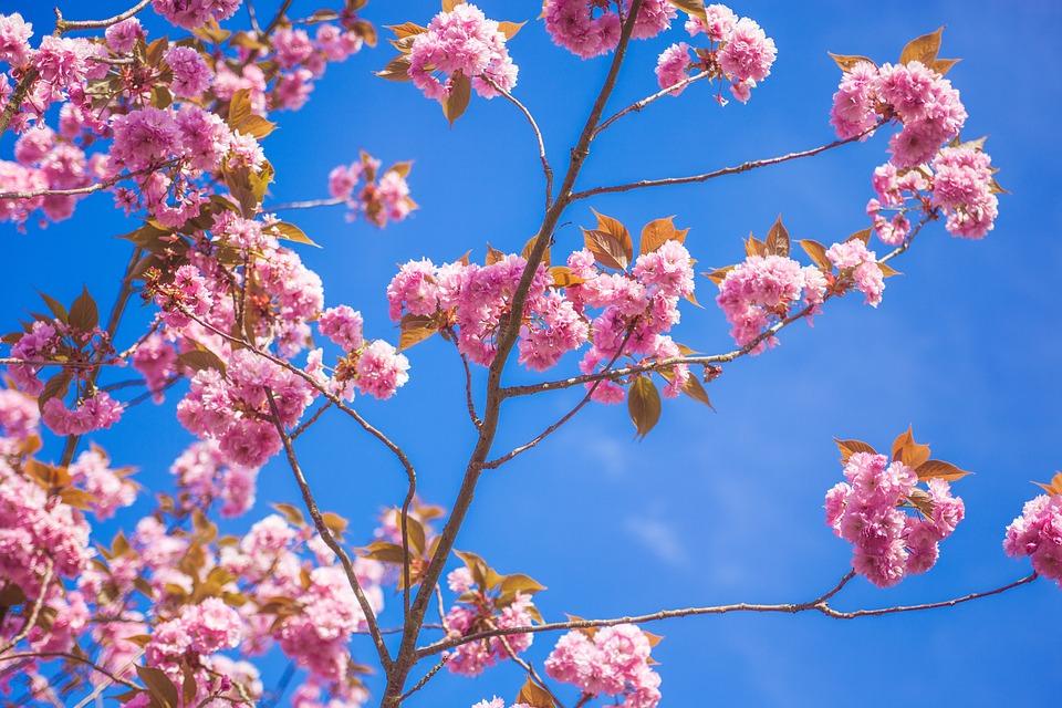 Bloom, Blossom, Flora, Flowers, Nature