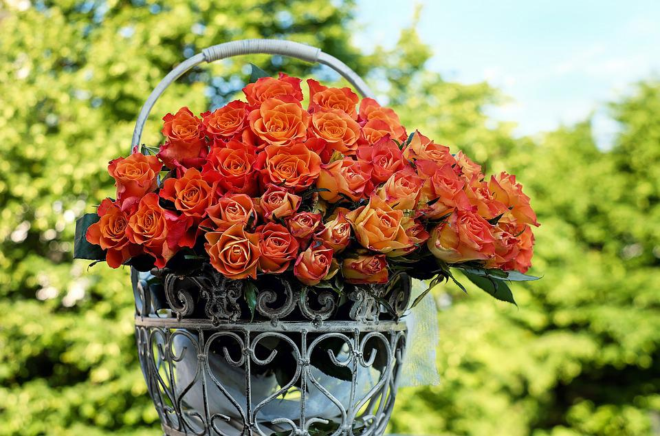 Roses, Bouquet Of Roses, Blossom, Bloom, Orange