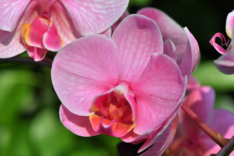 Orchids, Orchid Flower, Blossom, Bloom, Flower, Bloom