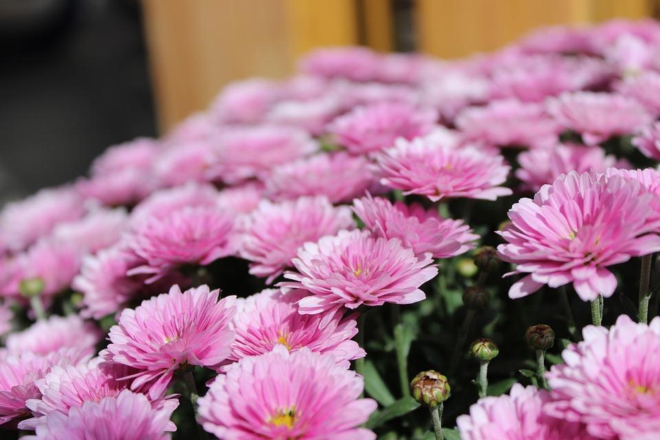 Pink, Flowers, Nature, Blossom, Bloom, Summer, Spring